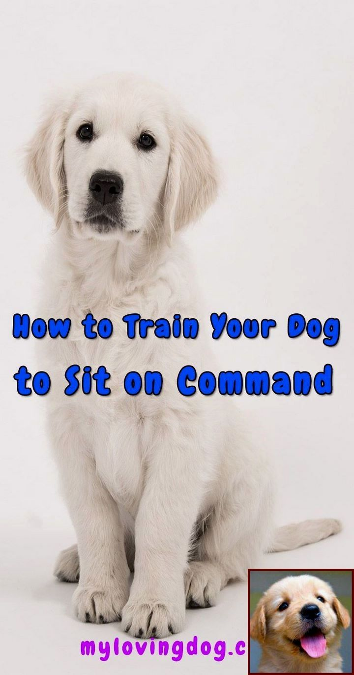 House Training Your Puppy Using Crate Kennel Method And Clicker