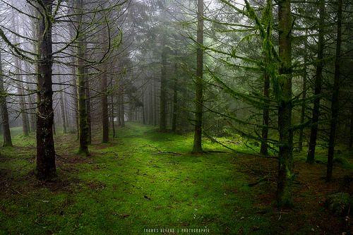 Dark forest - Thomas Devard