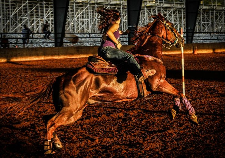 Pole Bending. Barrel Racing. Sorrel Gelding. AQHA. Racing