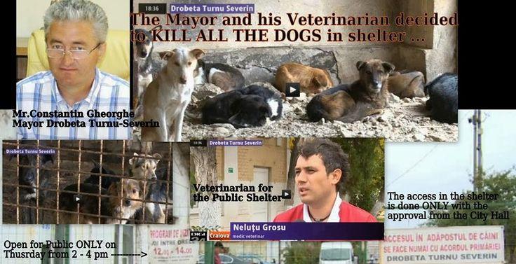 The Drobeta-Turnu Severin Dog Executions