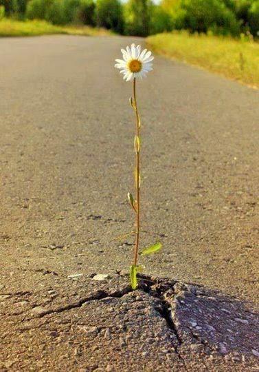 Hoop voor ouders met gebroken harten: Ik laat je niet in de steek!