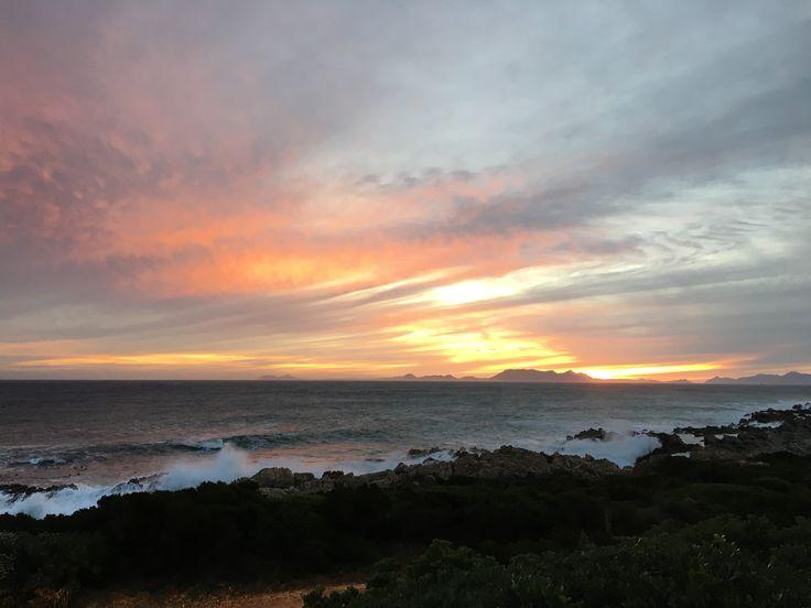 Sanderling - Pringle Bay - June 2016