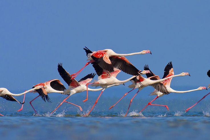 Flamingo House is named after the Flamingos that live all year around just outside of Casa Flor de Sal in the salt pans of Ria Formosa Natural Parc, Moncarapacho, Portugal
