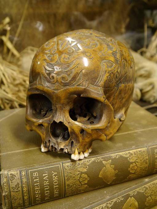 Skulls & Trophy Feet for sale - The Taxidermy Emporium