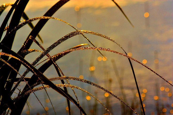 After the rain sun's rays gild the field Sotkuma, Finland / Terttu Sormunen…