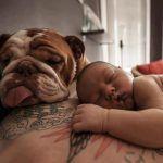 Siamo+persone+che+hanno+un+cane+e+lo+amano,+noi+non+abbiamo+bisogno+di+essere+capiti!