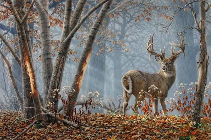 Broken Solitude- whitetail deer painting by Larry Zach