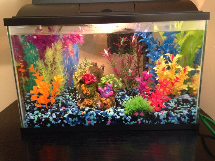 Small colorful fish tank the tank pinterest fish for Aquarium decoration diy