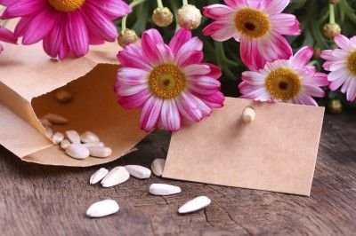 Community Seed Banks: How To Start A Seed Bank - Starting a seed bank is an easy way to contribute to the protection of your regional fauna and ensure future generation's access to them. What is a seed bank? Read here for information on creating your own seed storage.