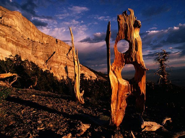 Great Basin National park is a United States National Park established in 1986, located in east-central Nevada near the Utah border. The park derives its name from the Great Basin, the dry and mountainous region between the Sierra Nevada and the Wasatch Mountains.