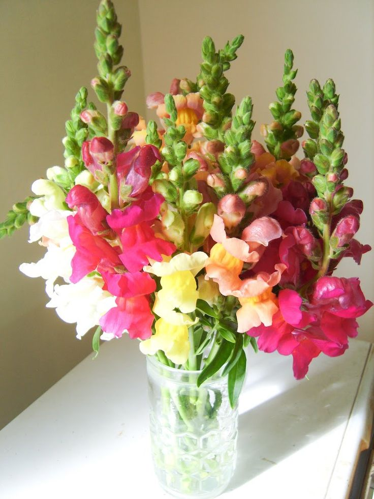 Best images about snapdragons arrangement on pinterest