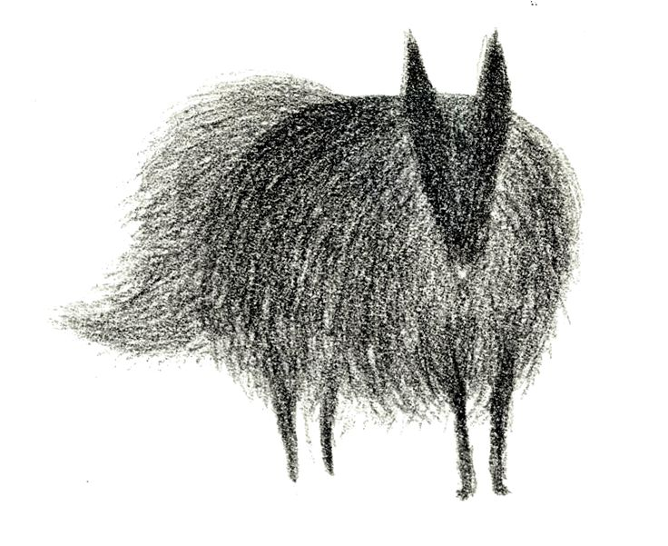 summer 2012 'Enounter a black dog who has fox-shape face in forest' Wensi Zhai