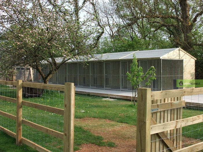 Best 25 dog kennel and run ideas on pinterest dog pen for Dog kennel shed combo plans