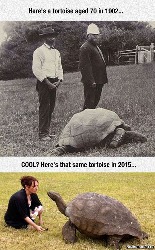 This Tortoise Has Been Alive For 183 Years wow