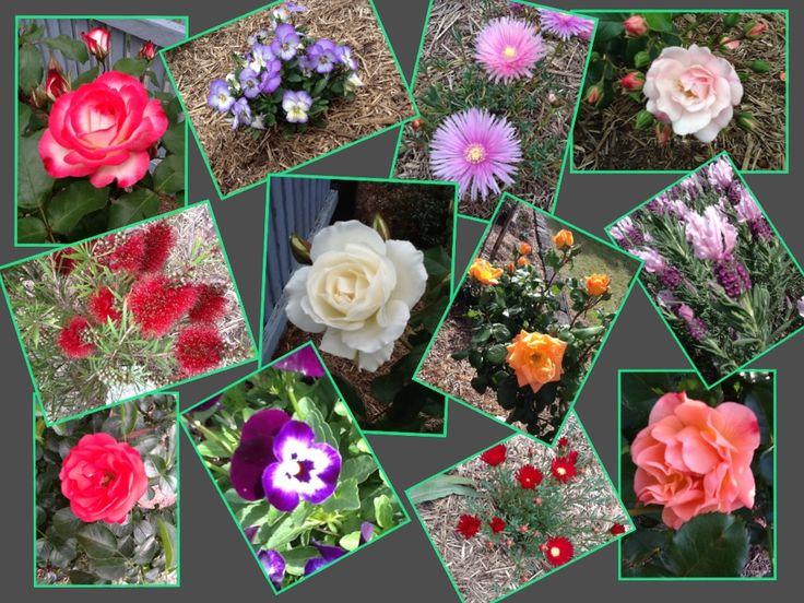 My garden flowers montage