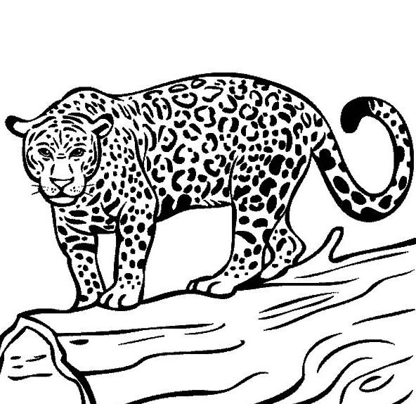 Jaguar Coloring Page Hd