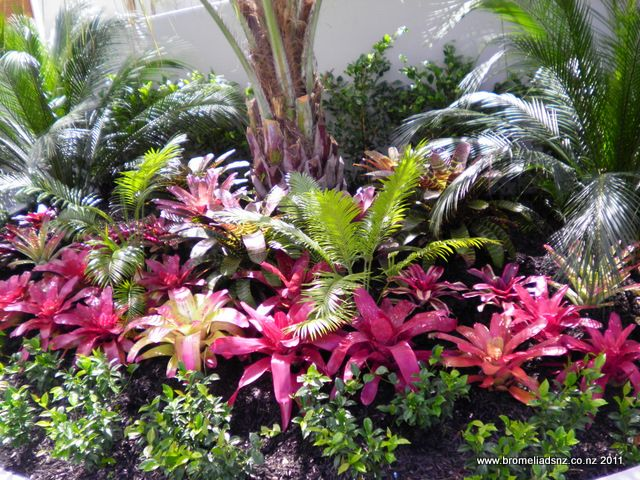 Another good idea tropicale pinterest tropical jardins tropicaux et jardins - Amenagement jardin tropical ...