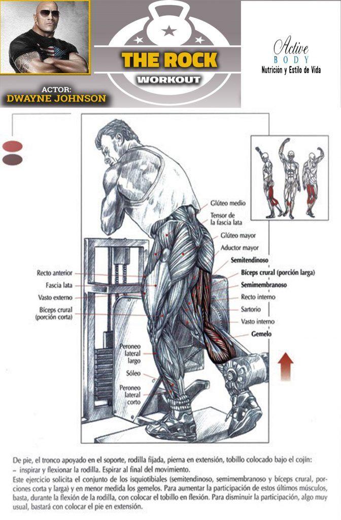 los mejores ejercicios para cuádriceps en el gym