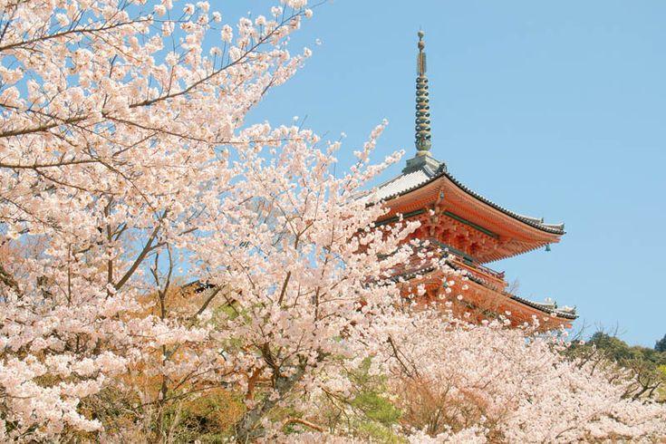 清水寺 三重塔と桜