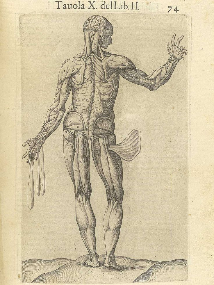 The 122 best Cuerpo Humano images on Pinterest | Human body, Andreas ...
