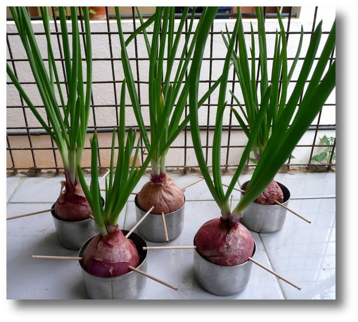 22 Foods You Can Regrow Again And Again From Kitchen: 8 Best Growing Food Images On Pinterest