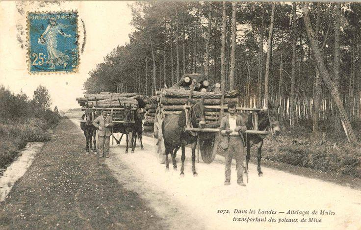 Mules. Lors du remplacement des boeufs par les mules, les utilisateurs   (...) Courtesy: Traits en Savoie. Excenevex, Haute-Savoie (France).
