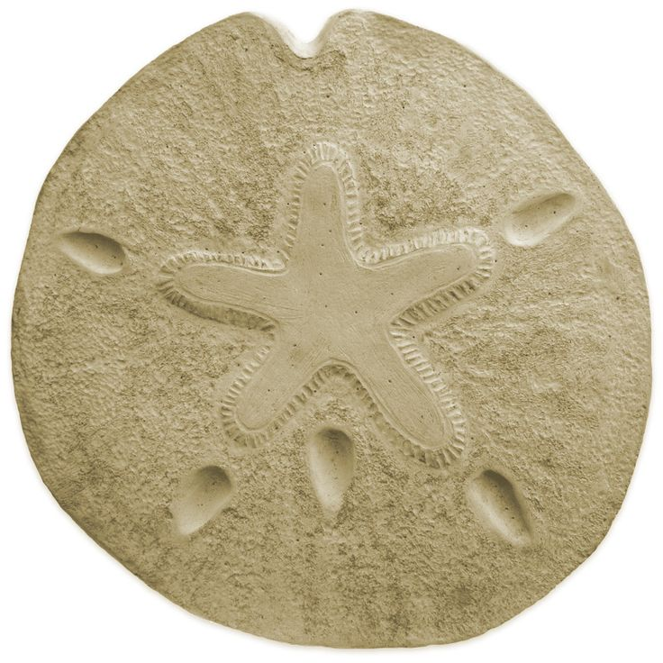 Garden Molds - Sand Dollar Stepping Stone Mold, $24.95 (http://www.gardenmolds.com/sand-dollar-stepping-stone-mold/)