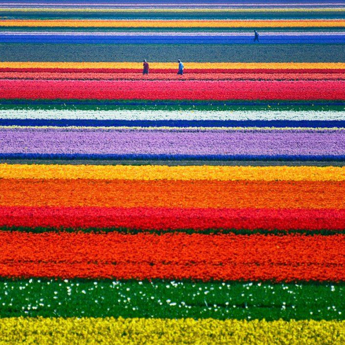 Amsterdam, Netherlands Amsterdam in April is the perfect time to frolic through a row of rainbow tulips that will certainly leave your head in the clouds.  Known for its spectacular landscape, The Netherlands is the perfect spring getaway and a great time to visit one of the city's many colourful flower markets! De L'Europe Amsterdam https://ther8.com/de-leurope-amsterdam-hotel Conservatorium Hotel (Amsterdam, Netherlands) https://ther8.com/amsterdam-conservatorium-hotel