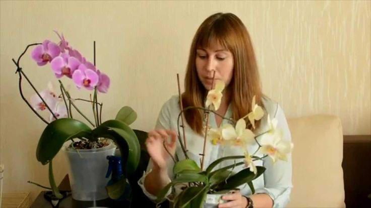 Как ухаживать за орхидеями Фаленопсис в домашних условиях: успешный опыт