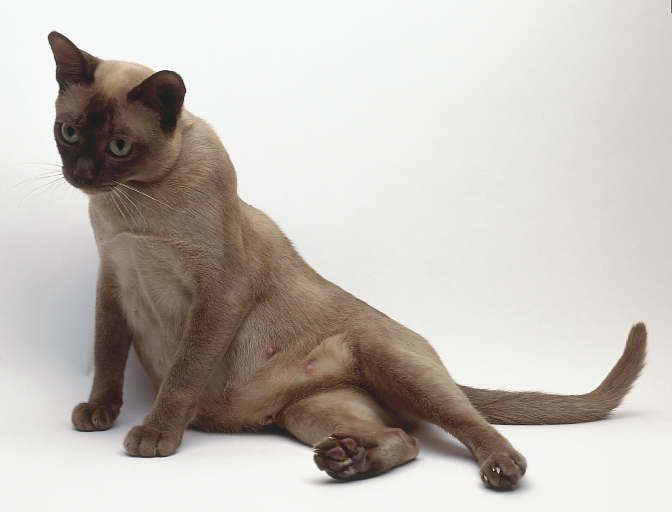 Pet Care Tips, Advice and Information - Caring for cat at Catsincare.com!- Top cats Tips at Catsincare.com!