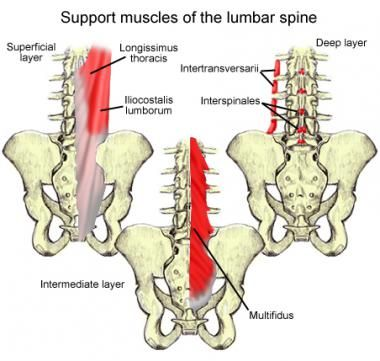 Lumbar Spine Anatomy: Overview, Gross Anatomy, Natural Variants - 380x361 - jpeg