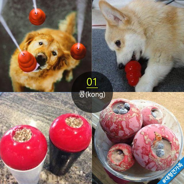 창의적인 강아지 장난감 만들기