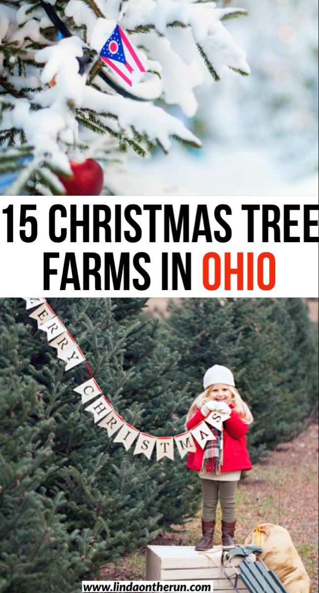 12 Best Christmas Tree Farms In Ohio Linda On The Run In 2020 Winter Travel Destinations Usa Travel Destinations Travel Usa