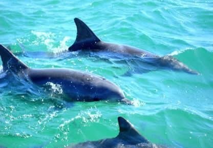 Coffin Bay Tours, the best way to see the bay.  Coffin Bay South Australia