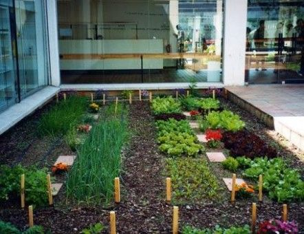 Si quieres cultivar tus verduras, legumbres y árboles frutales, no dejes sigue este post que te dice como hacer un huerto en casa con pasos sencillos. http://www.linio.com.mx/hogar/jardineria/