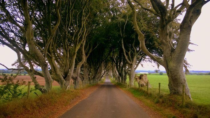 Dark Hedges, North Ireland