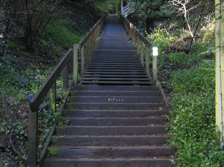 The Dipsea: One of the best races EVER