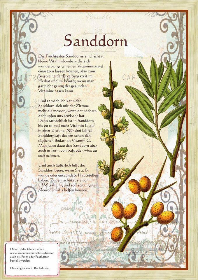 Sanddorn http://www.kraeuter-verzeichnis.de/