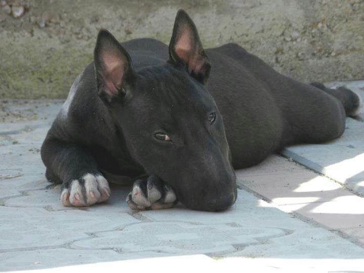 Lone Star Dog Ranch Adoption
