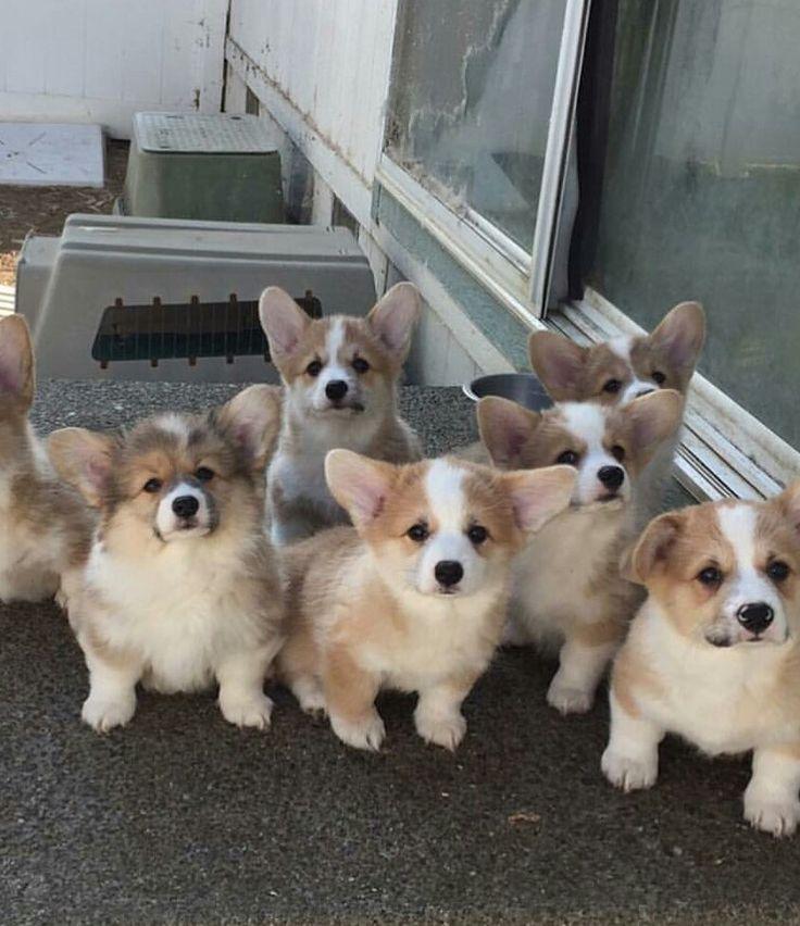 So cute i would love to live with thT many dogs so cuteeeeeeeeee