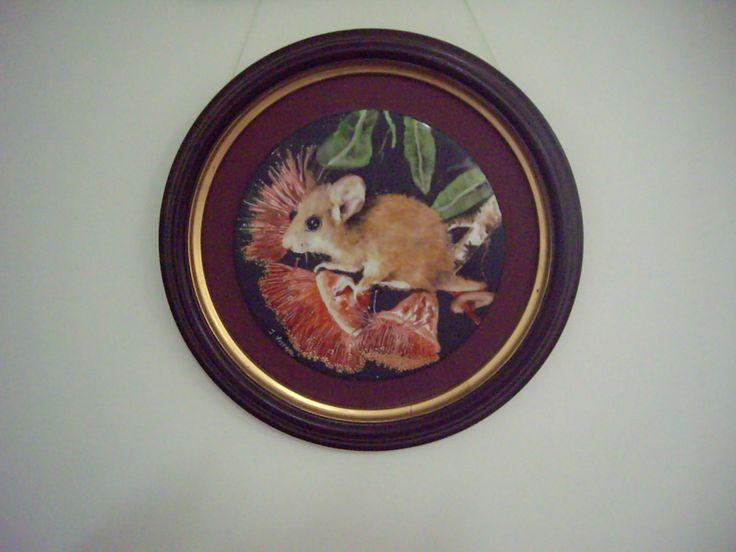Pygmy Possum by Jillian Varga. Sold