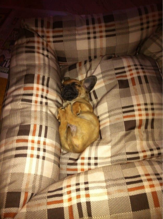 The 100 Most Important Puppy Photos Of All Time – 66. The Tiny Puppy in a Big Bed; Because is there really anything cuter than a tiny little puppy in a ginormous bed? The answer is no. http://www.pindoggy.com/pin/the-100-most-important-puppy-photos-of-all-time-66-the-tiny-puppy-in-a-big-bed-because-is-there-really-anything-cuter-than-a-tiny-little-puppy-in-a-ginormous-bed-the-answer-is-no/