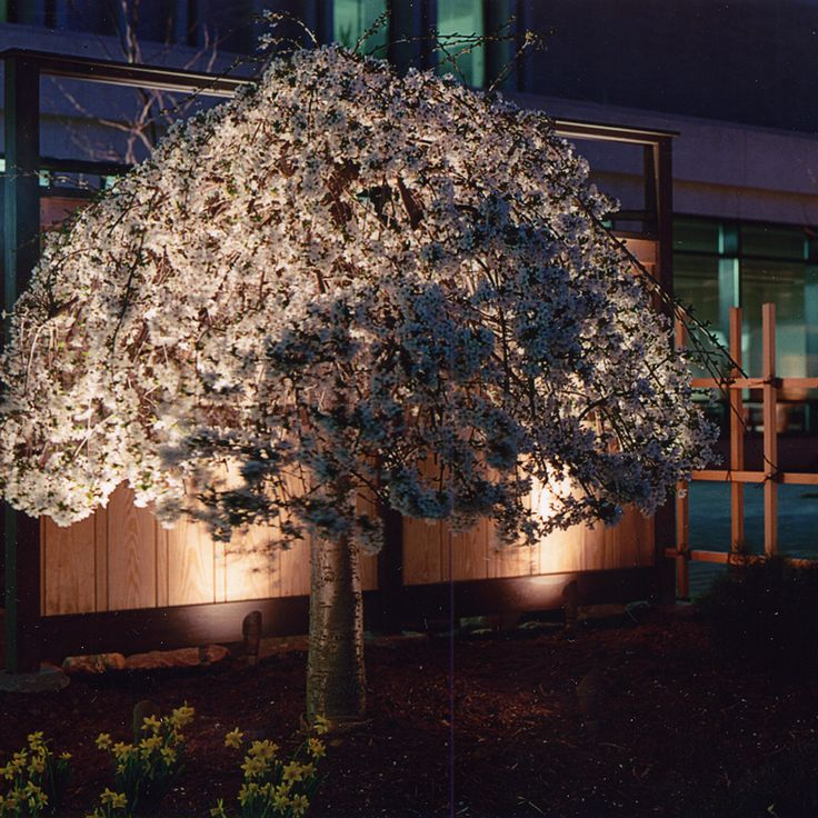 Uplighting for Trees and Shrubs: Fixtures Used – CAST Classic LED Bullet (CBLED141), CAST Classic MR-16 Bullet Light (CBL1CB), CAST Craftsman Series Bronze Spot/Wash Light (CSSL10536B, CSSL18336B, CSSL18354B, CSSL25036B, CSSL25054B (New), CCW105B (New), CCW270B), CAST Craftsman Series Silver Spot/Wash Lights (CCSL10536S, CCSL18336S, CCW270S)