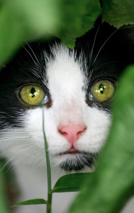 62 best images about feral cats: Summer/Winter Care on Pinterest : Cats, Feral cat shelter and ...