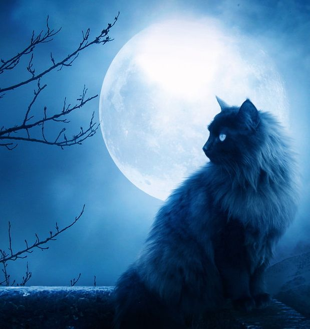 26 Best Images About Best Full Moons! On Pinterest