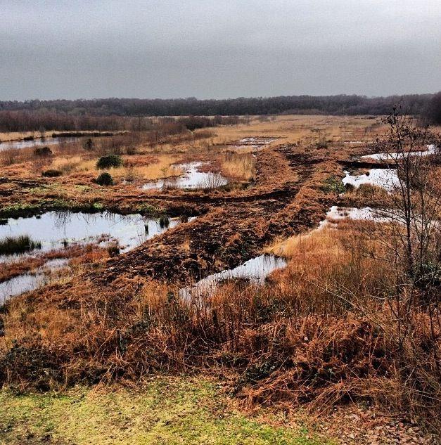 Risley moss nature reserve, England, warrington #beautiful #Risleymoss #Birchwood