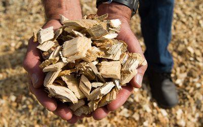 Virutas de madera destinadas para generar energía de biomasa.