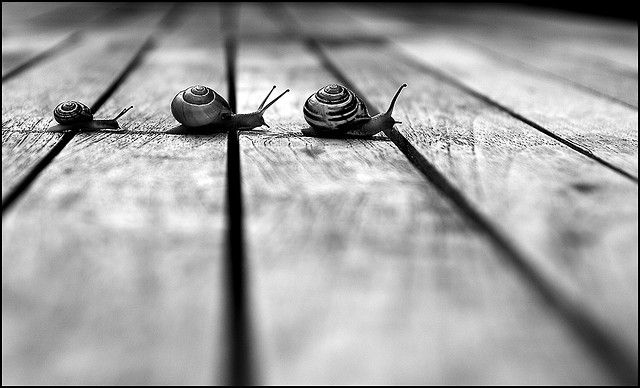 Snails by Ronald Koster
