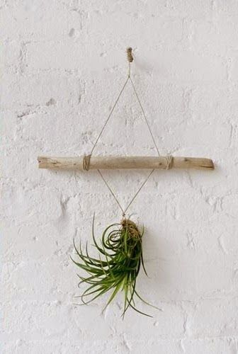 Air plant -DIY display