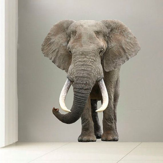 Best 25 elephant wall decal ideas on pinterest elephant for Elephant wall mural